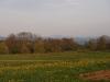 Rožice na travniku.