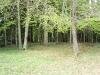 Pravljični gozd.