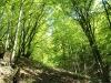 Zelen gozd.