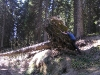 padlo drevo