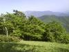 Čudovit bukev gozd na poti.