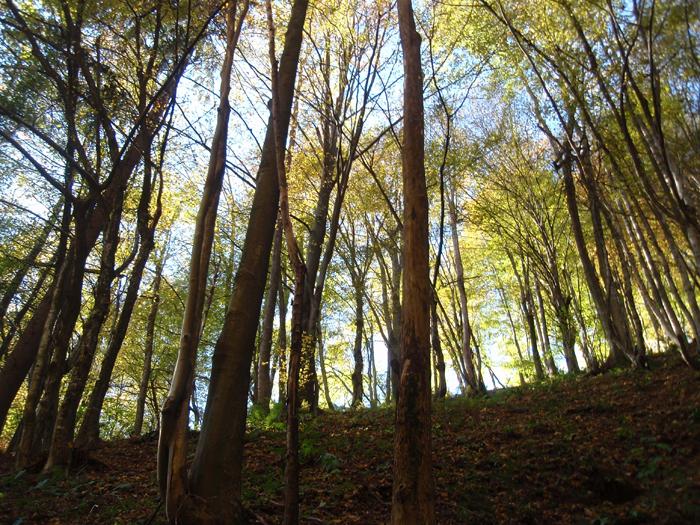 Gozd na poti.