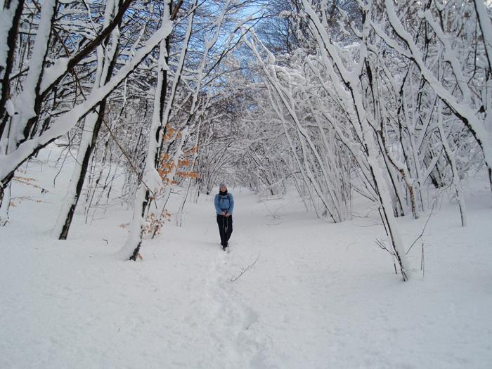 Snežni objem drevja.