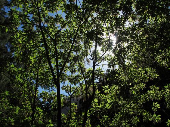zeleno listje na drevesih