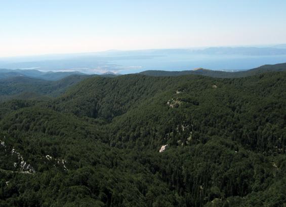 gorski kotar gozdovi