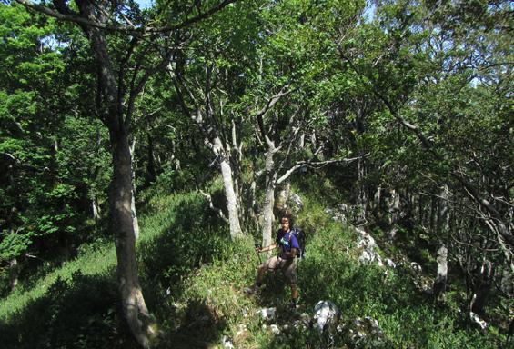 greben Strileža