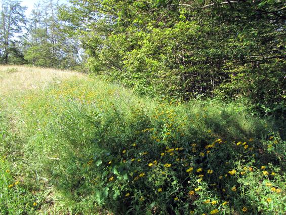 travnik na poti
