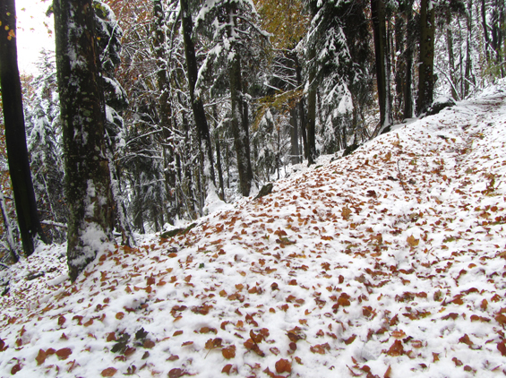 listje leži na snegu.