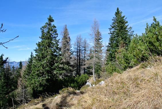 Čudovit gozd na poti proti Javorniškem prevalu.