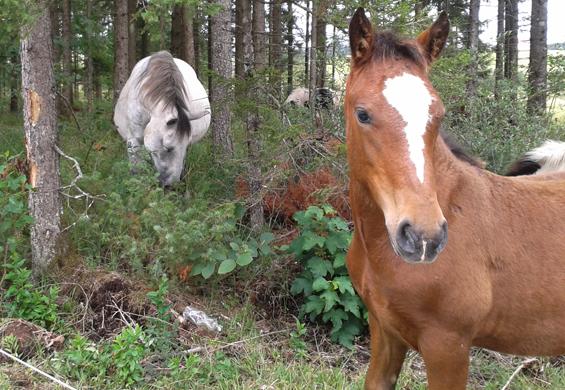 Konji na Blokah
