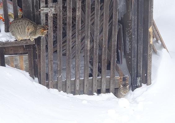 Mački na Blegošu